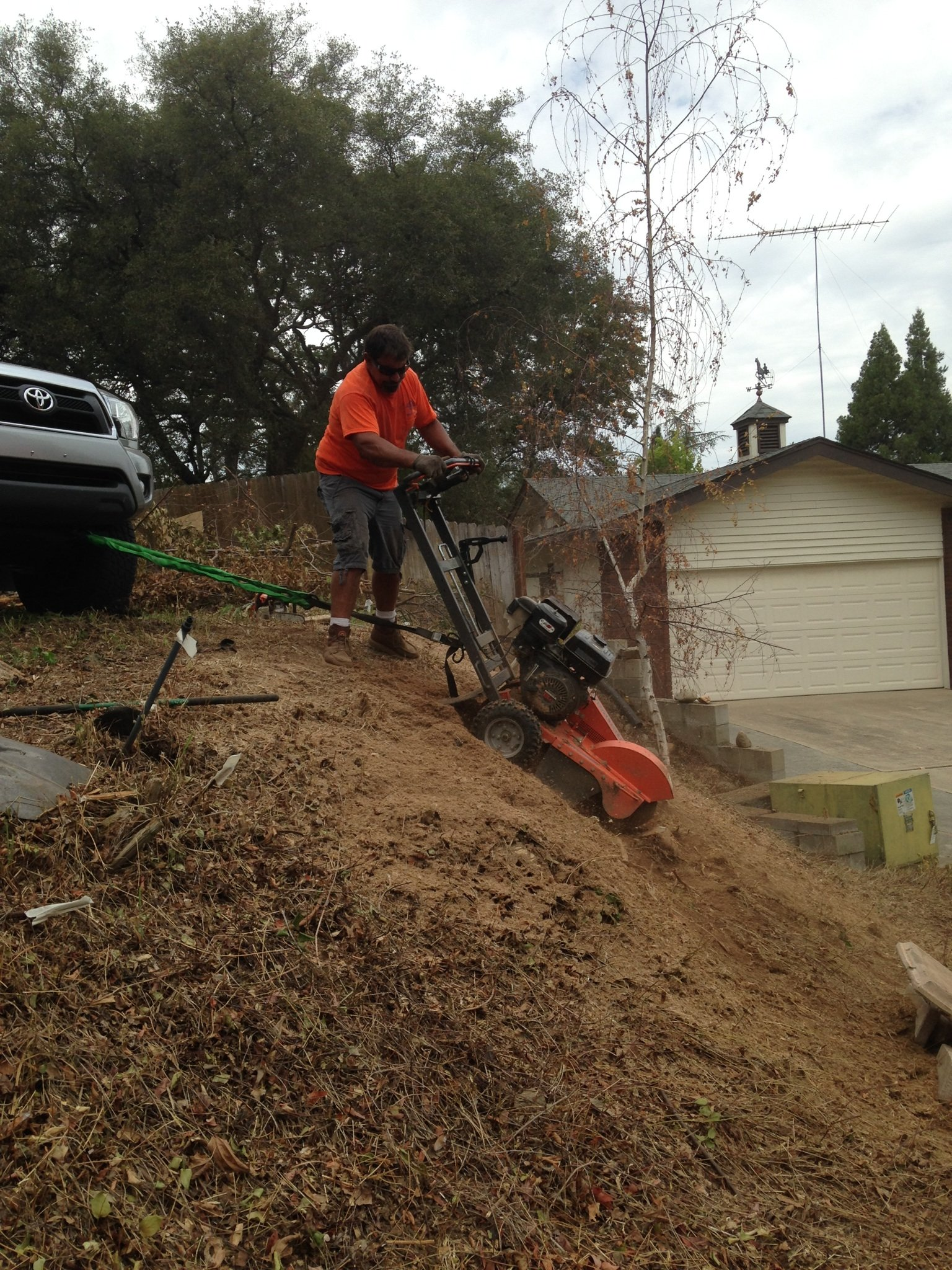 Unique Arbor - Tree Care Services Granite Bay, Colfax, Lincoln, Roseville, Rocklin, Loomis, Sacramento Tree Service Granite Bay Granite Bay Rocklin Roseville Tree Service Granite Bay Granite Bay Rocklin Roseville