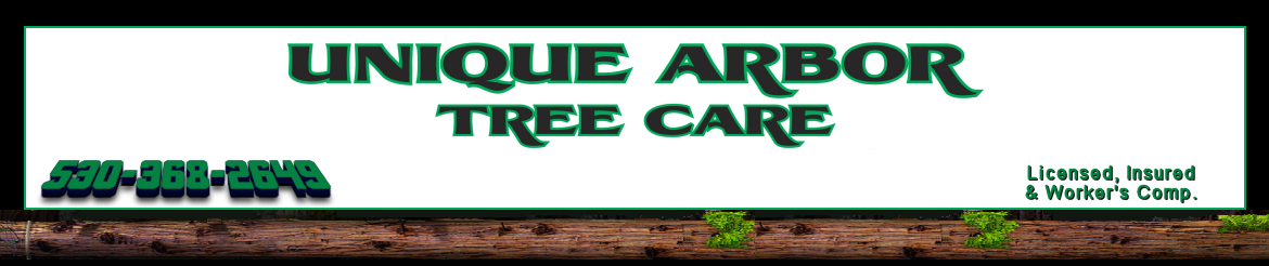 Unique Arbor Tree Care - Tree Trimming, Tree Removal, Tree Service Rocklin CA Granite Bay California Tree Service Granite Bay California